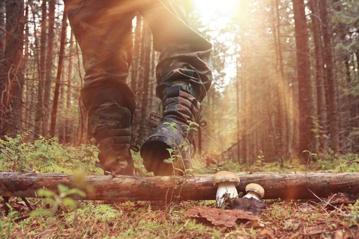 chasse nature gabion